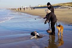 DSC03319 (ZANDVOORTfoto.nl) Tags: windstil strand zandvoort aan zee nederland netherlands beach beachlife bruinvis aangespoeld aangevreten zeehond kust jutter porpoise bruinvissen porpoises naaktstrand noordzee northsea