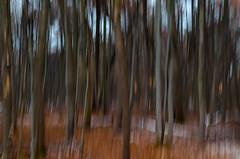 South Westnedge Park (bill.d) Tags: icm kalamazoocounty michigan portage southwestnedgepark us unitedstates autumn fall intentionalcameramovement nature outdoor overcast park snow