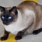 Ojazos #barcelonagatigos  #gatos #gatoscallejeros #cats #photocats #instacats #neko #meow #gatze #gatto #koshka #catsofworld #catsofinstagram #streetcats #catsofworld #siames #animalaugh #eyelicious #gatosdecolonia #gatosferales thumbnail