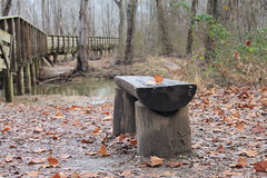 Worn Bench (rachelkidwell93) Tags: nature hike hiking tree trees forest forrest adventure trail park island harbor travel virginia explore bench natural old history historical sit relax fall leaves leaf dead mud muddy wooden hikers break low