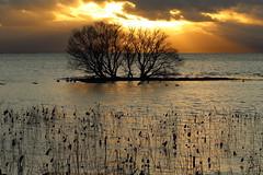 Beautiful evening (Teruhide Tomori) Tags: lakebiwa shiga kohoku landscape winter lake japan japon water afternoon evening nature 琵琶湖 湖北 日本 関西 滋賀県 自然 風景 夕景 sunset sun clouds sky sunbeam happyplanet asiafavorites