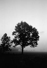 November tree (Rosenthal Photography) Tags: nebel landschaft twiste 20181101 bohnste schwarzweiss eiche irfoto 35mm bäume wense pflanzen epsonv800 ff135 baum städte olympustrip35 ilfordlc2912920°c11min ilfordsfx anderlingen infrarot analog asa200 dörfer siedlungen november tree lonleytree landscape mood autumn mist fog blackandwhite olympus olympus35 trip35 dzuiko zuiko 40mm f28 ilford sfx sfx200 lc29 129 epson v800 mistymirrors