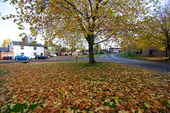 Nowton Road (Martin Pettitt) Tags: 2018 autumn burystedmunds dslr leaves nikond90 november nowtonroad outdoor sigma1020mmf456exdchsm suffolk trees uk