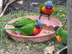 DSCF4146 (Josie Doefer) Tags: kansascity mo missouri animals zoo wildlife habitats birds exotic feathers avian