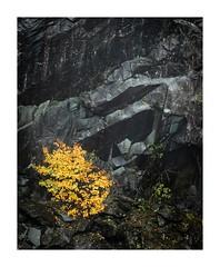 Hodge Close (SiKenyonImages) Tags: quarry slate wet rocks storm callum contract autumn hodge close lakedistrict coniston