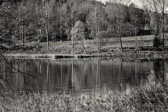 Monochrome (Stefano Rugolo) Tags: monochrome stefanorugolo pentax k5 pentaxk5 smcpentaxm100mmf28 landscape lake reflection trees reeds blackandwhite water countryside sky branches manualfocuslens manualfocus manual vintagelens hälsingland sverige sweden