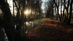 614A2301_00001 (frans.oost) Tags: dawn sunrise tree water landscape stream abigfave distagon1835ze