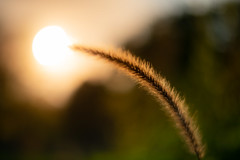 Noch einmal die Sonne streicheln... (Rafael Zenon Wagner) Tags: nikon d810 58mm 14 bokeh dof herbst farben autumn colors sun sonne