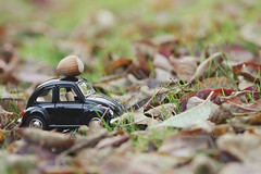 * (Sandra Köppen   P H O T O G R A P H Y) Tags: autumn bright beautiful beauty bokeh brown closeup cute colourful car dreamy detail delicate day decoration earthy fairytale fragile light leaves leaf macro morning minimalism nature natural outdoor pastel purple still season simple sparkle soft serene december tiny