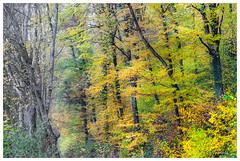Explosion de couleurs (Pascale_seg) Tags: paysage landscape forest automne autumn autunno tree orange yellow moselle lorraine grandest france nikon