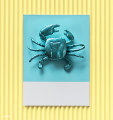 Little cute crab on a paper (Rawpixel Ltd) Tags: abstract background blue card colorful concept confetti crab craft creative cute decoration design disco effect festive figure fun glamour glitter glittery glow glowing green joy little mini miniature model name paper pattern play retro seafood sequin shape shimmer shine shiny small sparkle sparkling symbol texture textured tiny toy wallpaper yellow