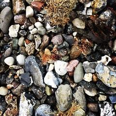 Strandgut (Frau D. aus D.) Tags: outdoor nature natur iphone kiel balticsea ostsee beach strand strandgut snail stones schnecke steine
