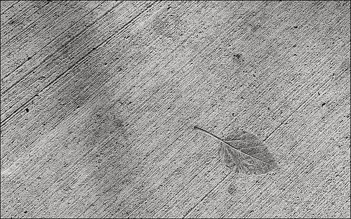 leaf_impression_sidewalk_bloor_8773259425_o