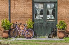 Estación Bonifacio (Marina-Inamar) Tags: estaciondetren estacion bicilceta perro ladrillos puerta textura bonifacio buenosaires argentina lila violeta challengegamewinner challengegroupgame