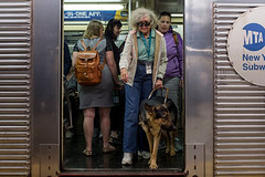 Learning With: 'A Final Proving Ground for Guide Dogs to the Blind: Midtown Manhattan' (kwaqas504) Tags: bbc news world ccn new york times
