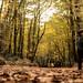 leaf-covered roads