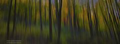 Forest Visions (hazarika) Tags: autumn fallcolors fall2018 panning vermont mausamhazarikaphotography abstract