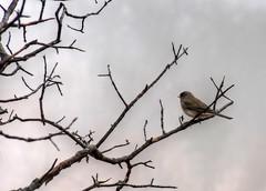 2019 - Vacation - Wichita Mountains Wildlife Refuge (zendt66) Tags: zendt66 zendt nikon d7200 wichitamountains wildlife refuge lawton oklahoma granite mountains fog nikkor 200500mm
