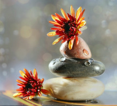 Finding my balance (Through Serena's Lens) Tags: macromondays balance stack pebbles stones smooth mums flowers stilllife droplets waterdroplets macro dof bokeh naturallight windowsill indoor zen canoneos6dmarkii