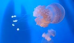 20180920_170915 (bryandkeith) Tags: unitedstates aquariumofthepacific longbeach