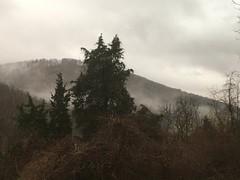 pine in the sky (GAWV) Tags: mountains mountain sunset fog graysky westvirginia appalachian appalachia sky keyser mineralcounty forest grass pasture winter clouds
