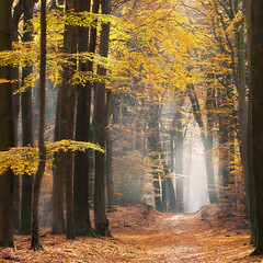 Path to ......... (IngridVD. Photography) Tags: herfst spriederbos bomen speulderbos trees nature forest autumn leaves fineart netherlands canon5dmkiv canon mist fog landscape