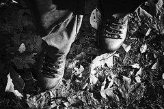 hiking (Jos Mecklenfeld) Tags: autumn herbst herfst nature natur natuur forest wald bos westerwolde niederlande nederland totoro dutchshepherd jipsingboertange groningen netherlands nl hinking wandern wandelen sonya6000 sonyilce6000 bw