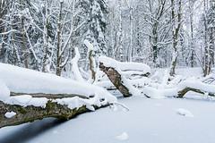 Winter Creek (bayernphoto) Tags: bach creek verschneit holz baeume trees ice eis zugefroren frozen wald forest tierpark zoo muenchen munich hellabrunn winter schnee kalt snow bayern bavaria gefroren fluss river weiss white