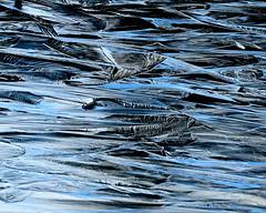 Blue Ice (Renee Wood) Tags: ice spokaneriver postfalls idaho abstract