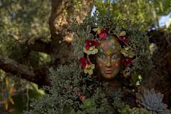 Queen of Cammo (Len Langevin) Tags: sandiego california botanical gardens plants flowers nikon d7100 nikkor 18300
