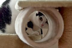 Quien piense que los gatos son traicioneros, indiferentes e interesados, es porque todavía no conoce a los humanos. (elena m.d.) Tags: nikon d5600 sigma sigma105 animales animal milú