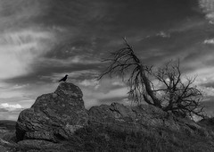 The Void (charhedman - off for about a week) Tags: thevoid blackandwhite rocks tree bird silhouettes sky inthemiddleofnowhere actuallysomewhereinalberta spooky raven neilgaiman