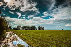 IMG_1964-2 (gidlark) Tags: landscape field nature grassland countryside sky clouds ukraine