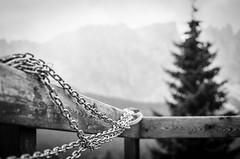 gesichert (chipsmitmayo) Tags: minolta xd7 rokkor 50mm f14 adox silvermax adotech 100 film analog schwarzweiss blackandwhite bw südtirol alto adige dolomiten carezza berge alpen kette chains tanne baum