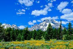 Beautiful Grand Teton National Park (J Price - Alabama) Tags: wyoming mountain mountains trees flowers wildflowers clouds cloudscape blue bluesky beautiful beautifullight jacksonhole jackson nationalpark nationalparks snow peak peaks usa tetons grandteton outwest idaho