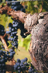 Le Domaine François Bléger (VinéoNews Alsace) Tags: routesdesvins alsace journal magazine vinéonewsalsace vin viticulture sainthippolyte domainefrançoisbléger