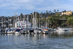 Tiburon Yacht Club (dcnelson1898) Tags: angelislandstatepark angelisland tiburon sanfranciscobay california northerncalifornia statepark outdoors america usa unitedstates tiburonyachtclub boats