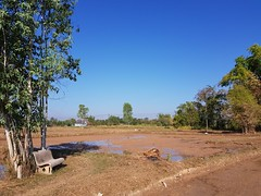 Park Bench in the Paddies (SierraSunrise) Tags: agriculture bench esarn farming isaan nongkhai paddies parkbench phonphisai ricepaddies ricepaddy seat thailand
