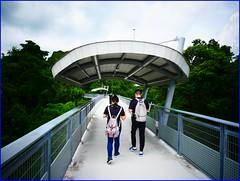 fort siloso - walking on skywalk (j0035001-2) Tags: sentosa singapore war history battery museum fortsiloso skywalk forest nature greenery tree