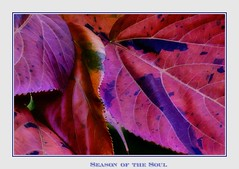 Season of the Soul (Christina's World!) Tags: textures trees leaves nature naturallight naturepreserve red purple blue gold autumn november california sandiego botanic garden macro border brightcolors brilliant creative colorful dramatic digitalpainting frame natureabstract outdoors painterly plant fall stilllife romantic unitedstates usa vegetation eoft platinumphoto topclass passagetobeauty exquitsiteimagery