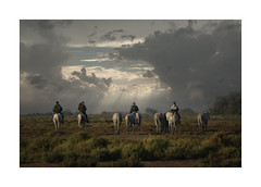 The Quiet Walk Home (janinelee66) Tags: camargue horses france sky people riders