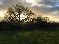 Winter Sunrise (Heaven`s Gate (John)) Tags: cold winter sunrise trees clouds silhouette sunshine field grass johndalkin heavensgatejohn solihull warwickshire england shadows 10faves