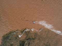 After the Storm (milfodd) Tags: july 2018 aerialphotography quadcopter dji drone phantom4pro muddywater stormrunoff insect
