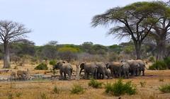_DSC5151 (acomb) Tags: tanzania roadtrip tandala ruaha