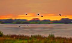 Solitude-533 (Wim Koopman) Tags: river rhine lek flowing glowing bloom trees shore water flow color digital art delta estuarium duck flight flying holland netherlands dutch