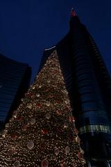 _X5C4536 (carlo612001) Tags: city milano italia italy natale feste christmastime christmastree abete alberodinatale