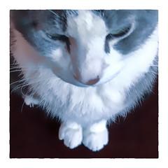 Aligned (Timothy Valentine) Tags: 0119 quinnomannion happycaturday 2019 home cat eastbridgewater massachusetts unitedstatesofamerica us