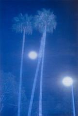 The Two Moons (Silver) (Sean Kobi Sandoval) Tags: moons palmtrees huntingtonbeach filmfestival amsterdam eyefilmmuseum kabk nostalgia homesick