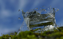 Watched out for hard water (Le.Patou) Tags: challenge macromondays picktwo macro closeup fz1000 glass broken damaged water pouring moss green