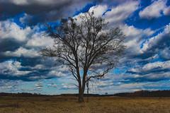 Wood (Péter Vida) Tags: natural wesen springtime vorfrühling wood baum sky himmel scenery panorama természet tavasz fa ég tájkép